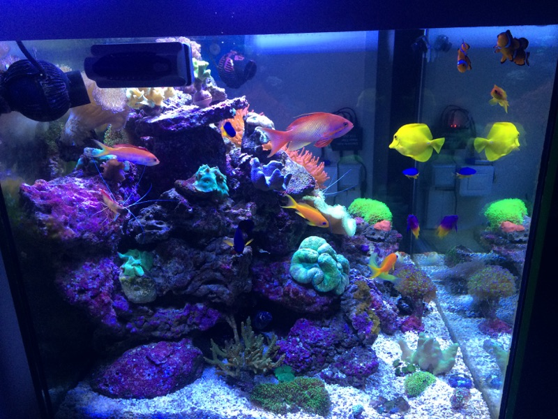 Photo de mon aquarium  15122405553584303