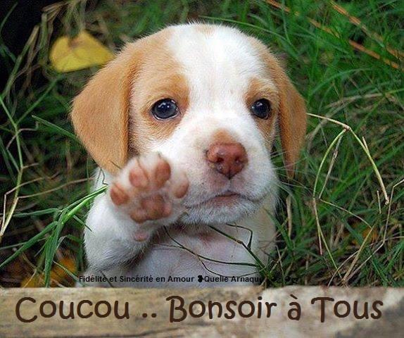 Bon Mercredi 160127081232543148