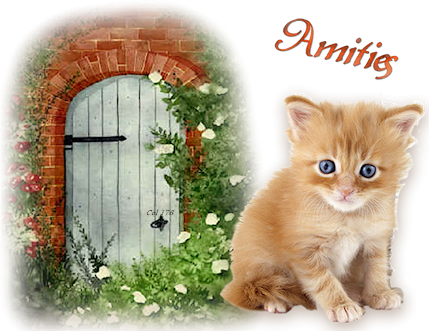chaton Porte