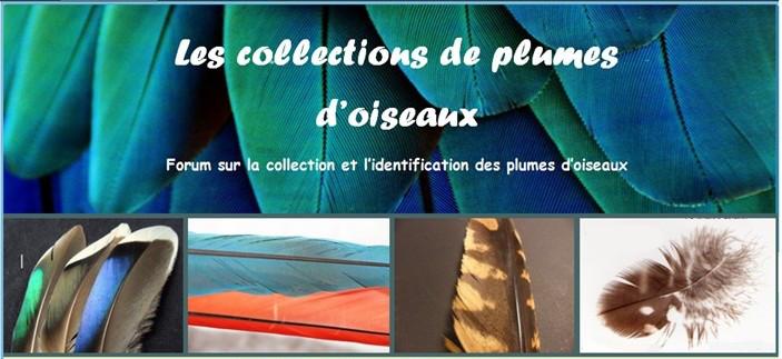 Les collections de plumes d'oiseaux