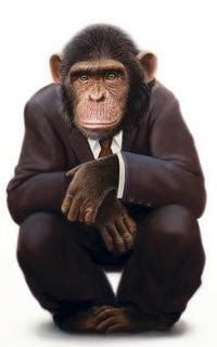 Bobo T. Chimp