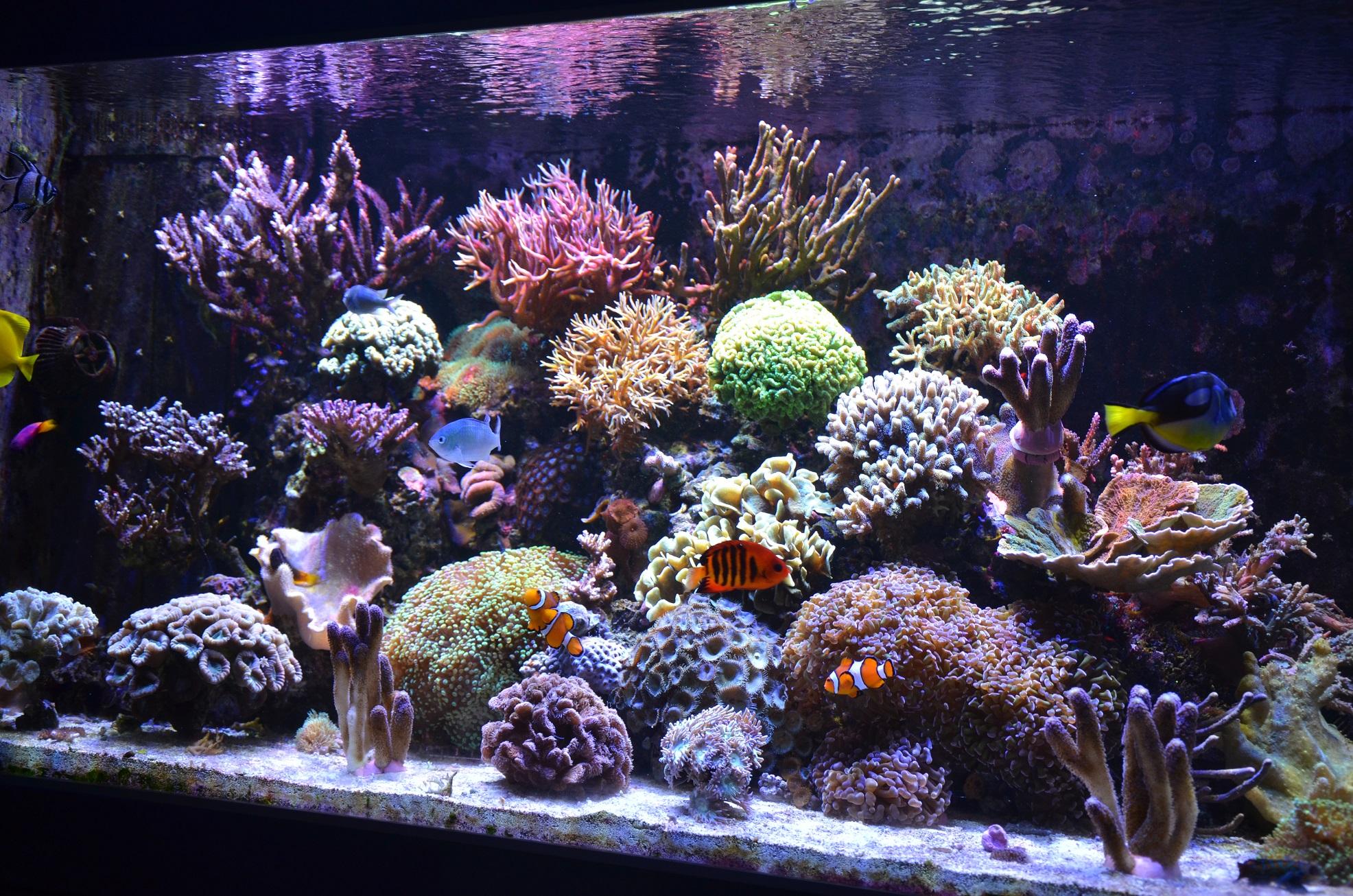Le Reef de Loy (2) - Page 9 160224061605348616