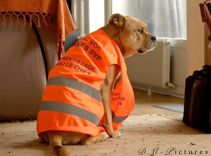 DINOS: le ruban jaune pour les chiens qui ont besoin d'espace  - Page 9 160310094354768677