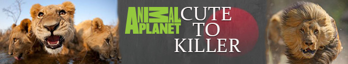 Poster for Animal Planet Cute To Killer
