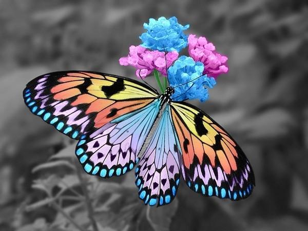 papillon-62-3be13e3