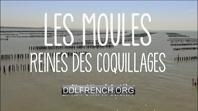 Les moules, reines des coquillages uptobox torrent streaming 1fichier uploaded