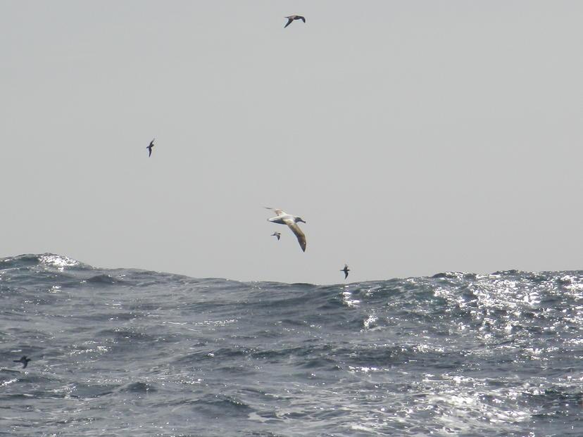 du-gris-et-des-albatros_articleSlider
