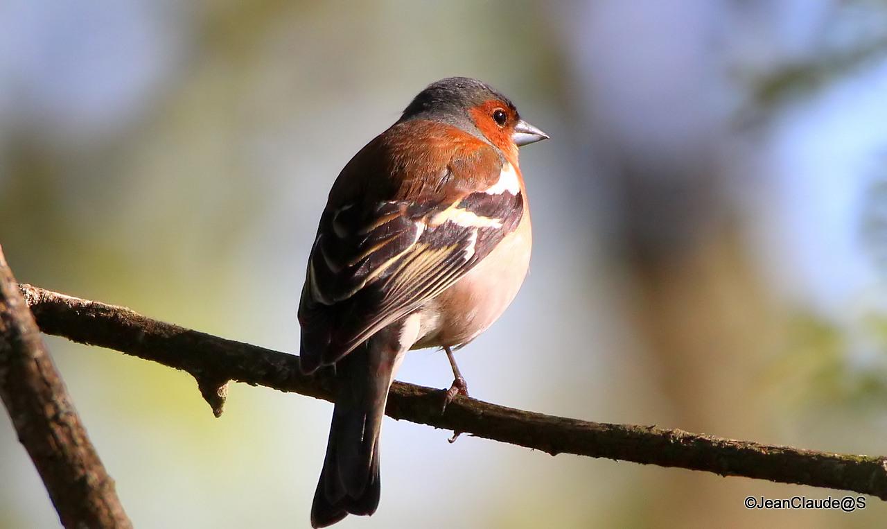 Ballade Ornithologique 16050406015257009