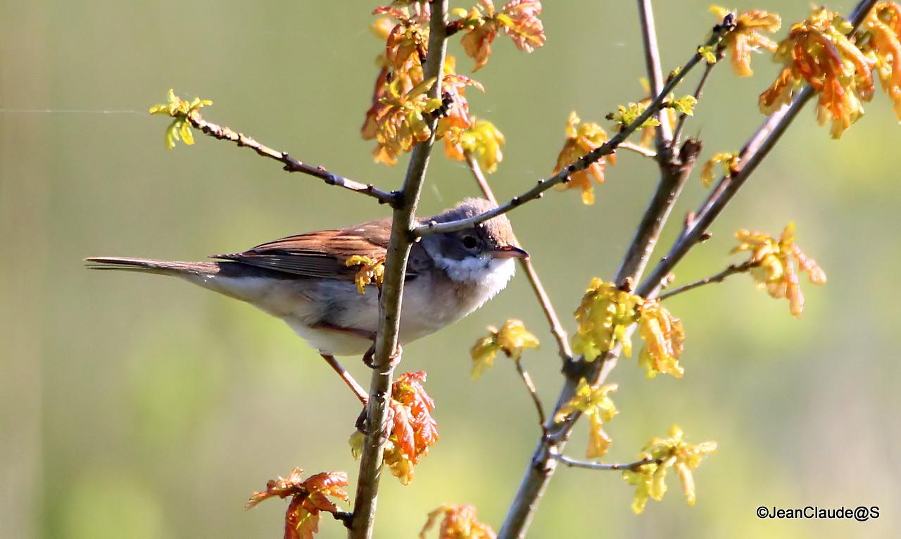 Ballade Ornithologique 160504060158438277