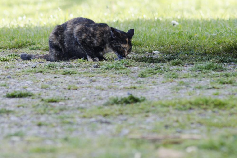Merguez, femelle type européenne écaille de tortue née  - Page 3 160514104134806641