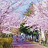 L'université, Japon et groupes |  160523065240713814