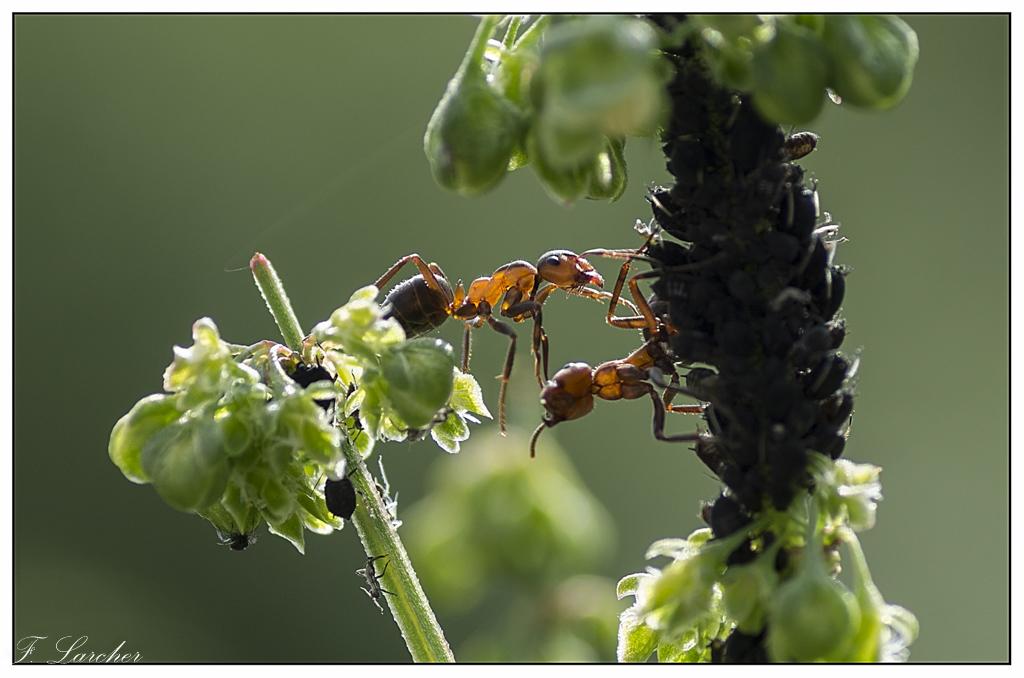 Le peuple des fourmis 160618081737624742