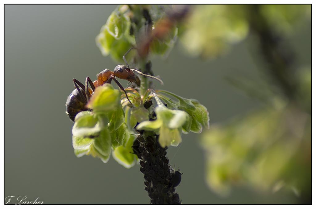 Le peuple des fourmis 160619113121743552