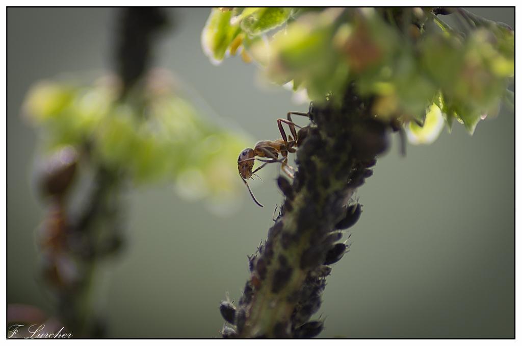 Le peuple des fourmis 160619113121881187