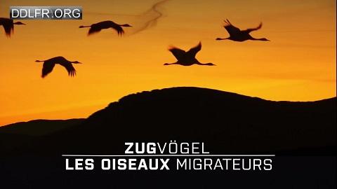 A tire d'aile Les oiseaux migrateurs