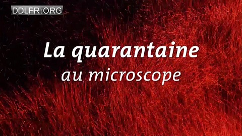La quarantaine au microscope