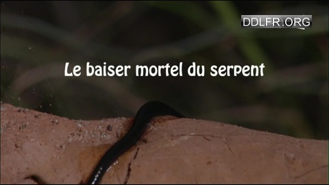 Le baiser mortel du serpent uptobox