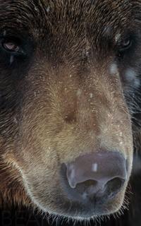 Créer une fabrique d'enfants en peluche pour les ours ✌