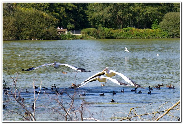 Parc de Villars les Dombes  161001105832946269