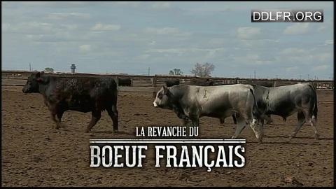La revanche du boeuf français