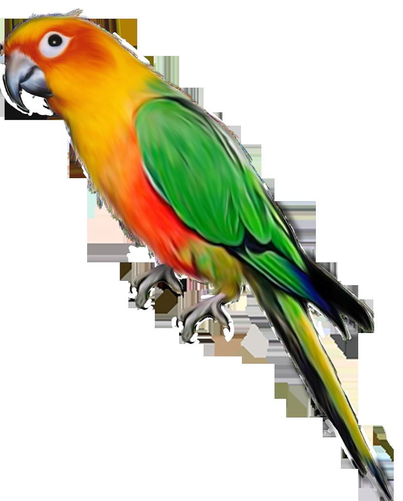 Photos d'oiseaux sur fond blanc 161026094527483706