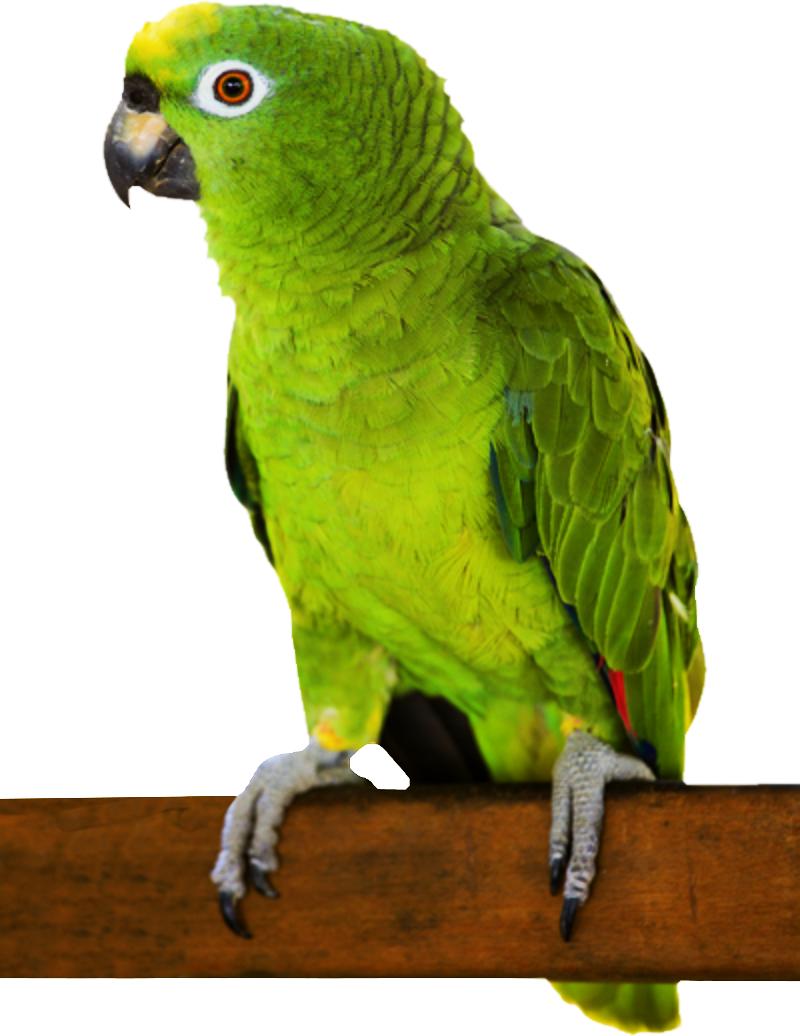 Photos d'oiseaux sur fond blanc 161026094536875820