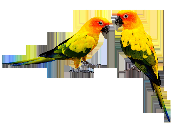 Photos d'oiseaux sur fond blanc 161026102317149310