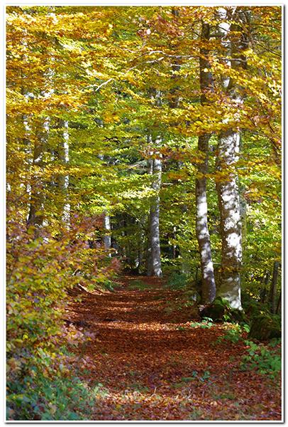 Couleurs d'automne  encore... 161030062122354242