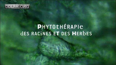 Phytothérapie, des racines et des herbes