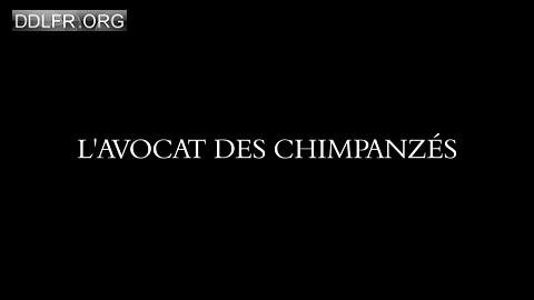 L'avocat des chimpanzés