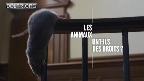 Les animaux ont-ils des droits