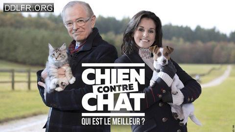 Chien contre chat : qui est le meilleur ?