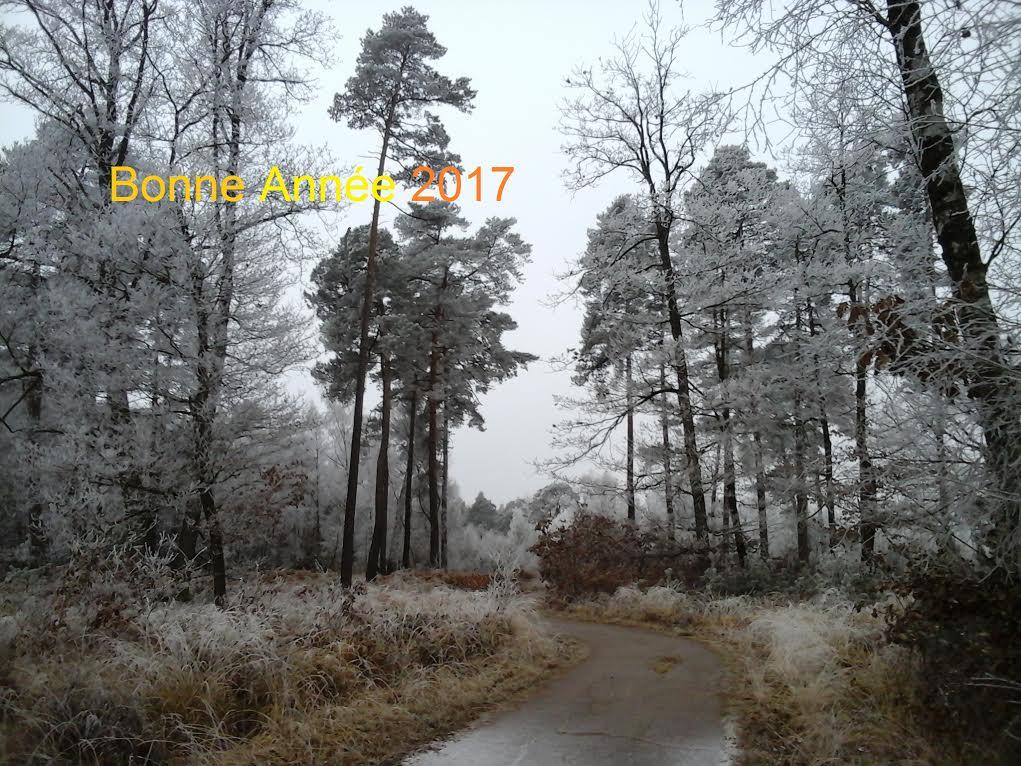 BONNE ANNEE 2017 170102082147392377