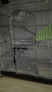 Cage, grillage, accessoires, désespoir et autres mots clés  Mini_17010402033826999
