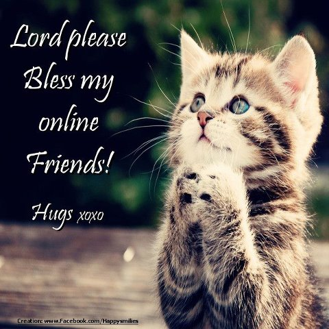 cat Lord please
