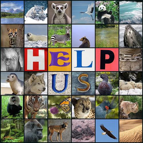 Help us (animaux)