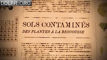 Sols contaminés des plantes à la rescousse