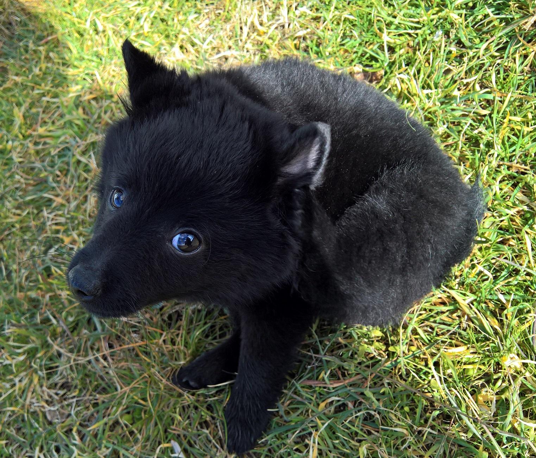 Les tribulations d'un petit loup noir. 170202105943919736