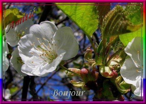 MARDI 21 MARS 2017 Sainte CLEMENCE 17032112070085514