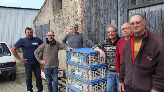 pigeons-voyageurs-de-saint-gilles-nouveau-en-course