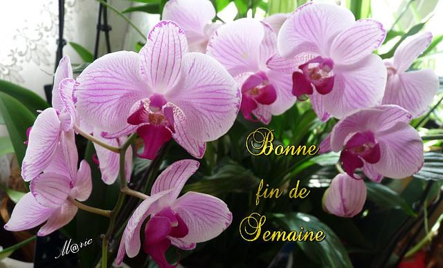SAMEDI 22 AVRIL 2017 Saint ALEXANDRE 170422125159641864