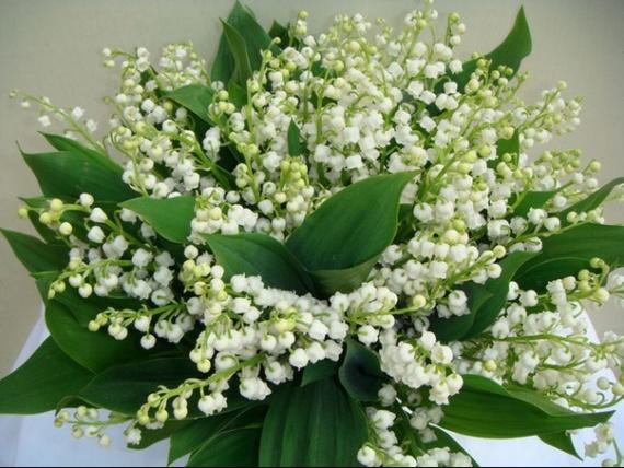LUNDI 1er MAI 2017 St JEREMIE et fête du TRAVAIL 170430111926178373