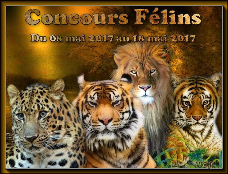 Participation à certains concours SUITE >>>>>>> 170520111025263267