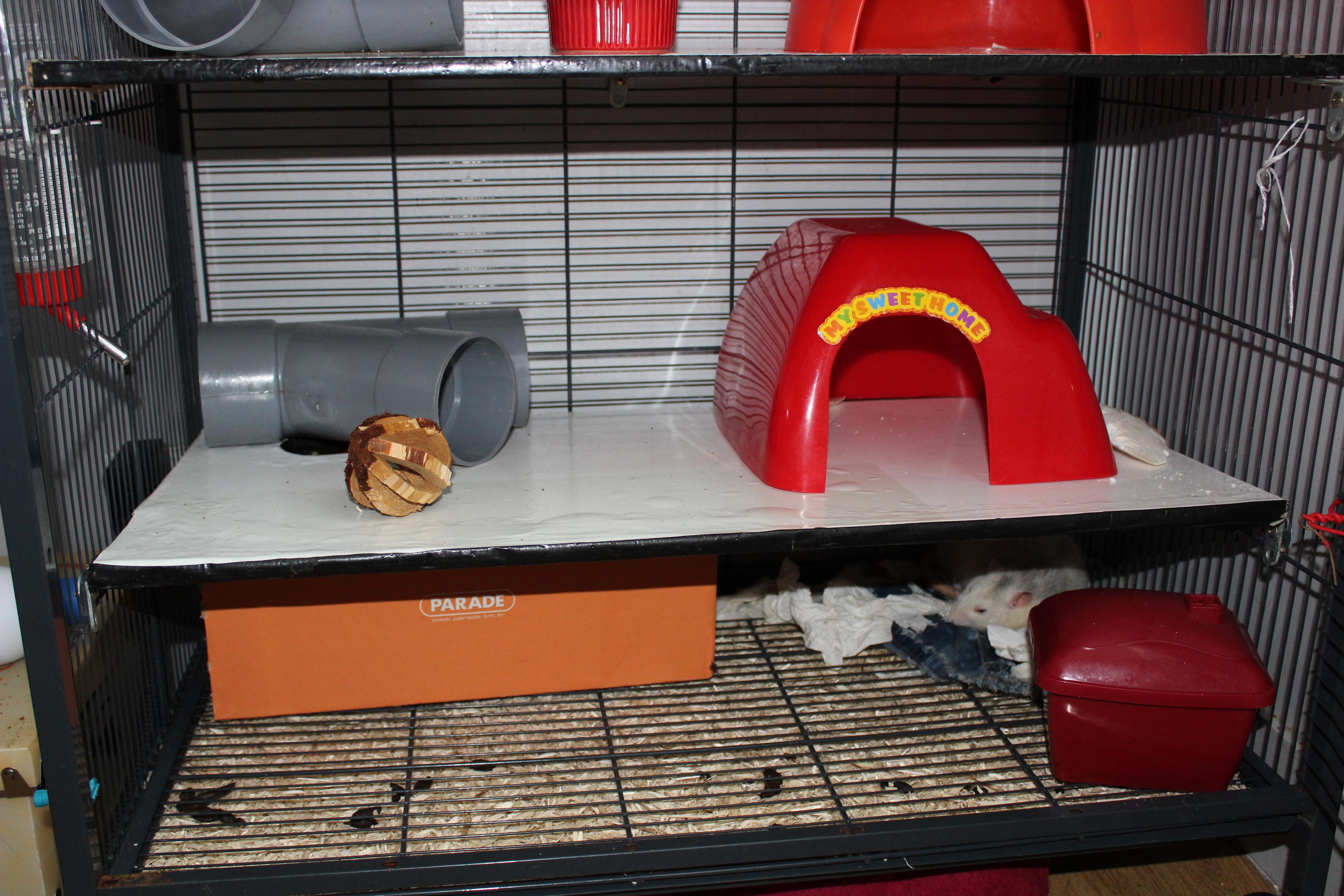Cage à lapin pour mes rats 170803122058479387